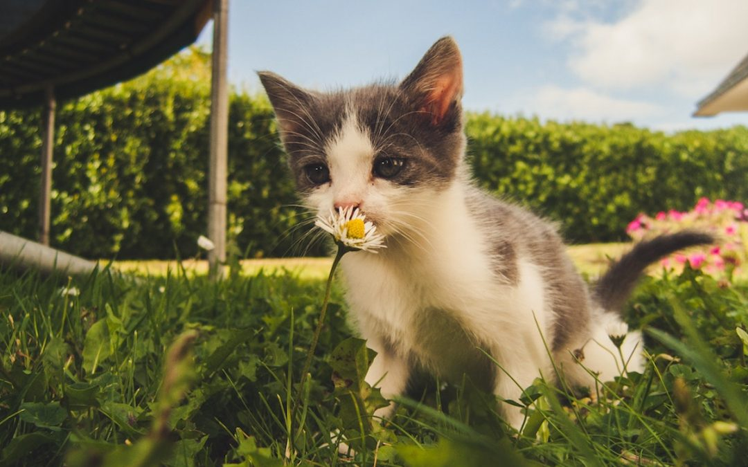 7 Ways To Keep Your Pet Safe In Your Garden