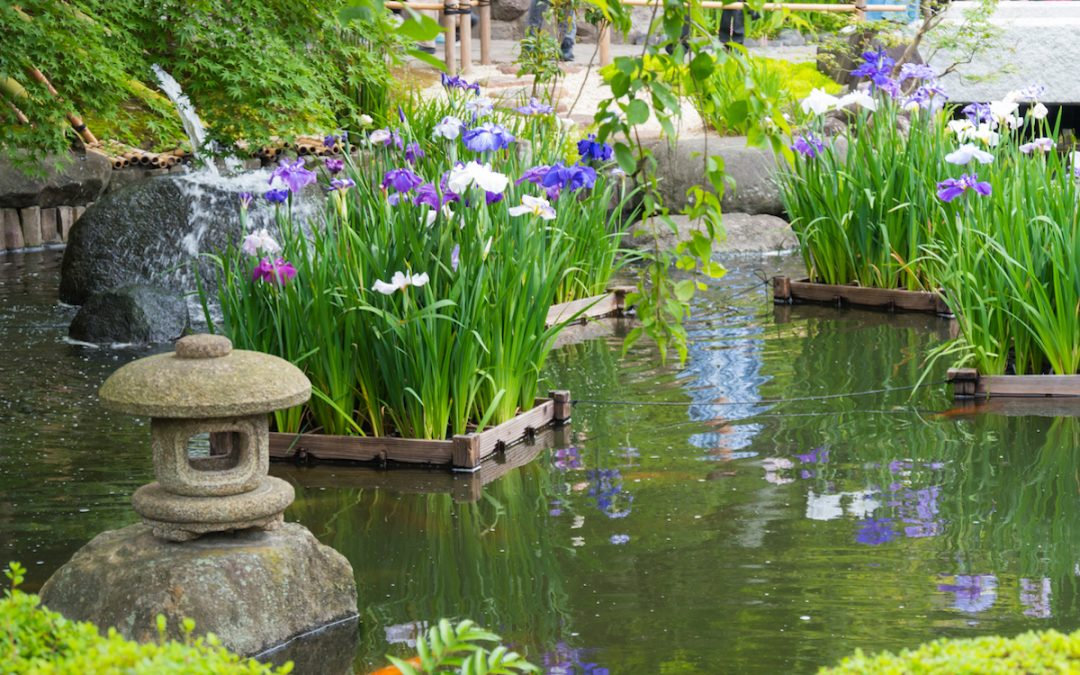 How To Create A Zen Garden In The British Climate