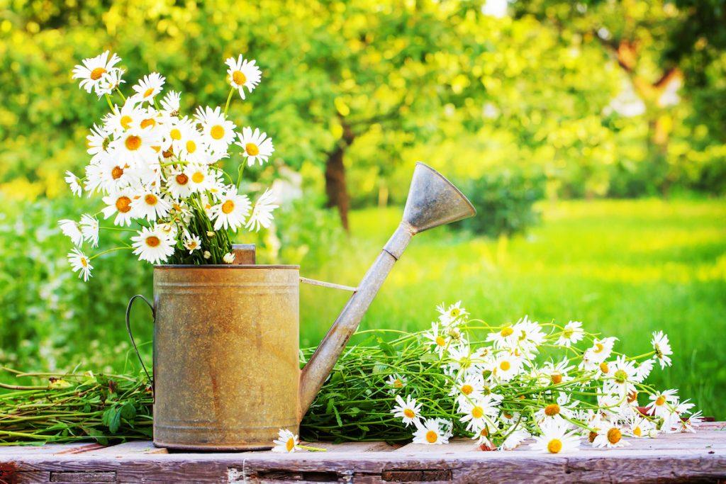 5 Tips For Summer Gardening