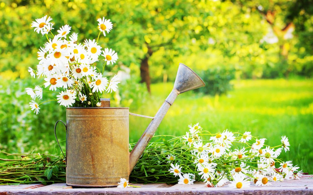 5 Tips For Summer Gardening